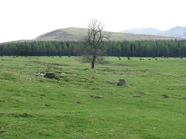 Grazing by Loch Moraig