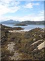 NG6113 : Over the seaweed : Week 34