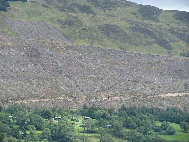 Clear fell, Loch Tay