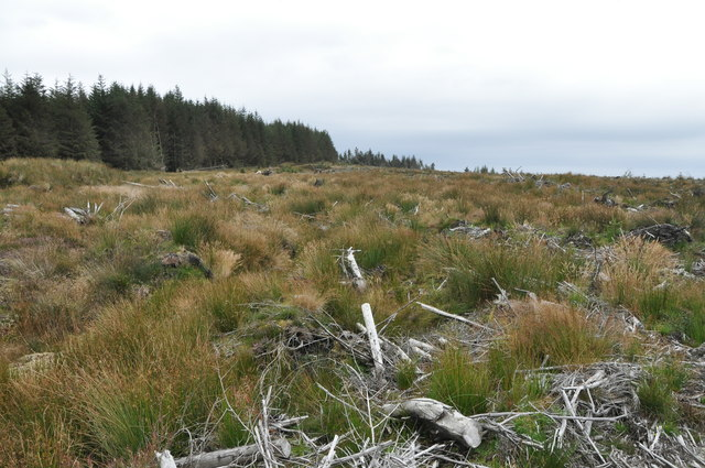 Forest edge, West of Cnoc Buidhe, Kintyre