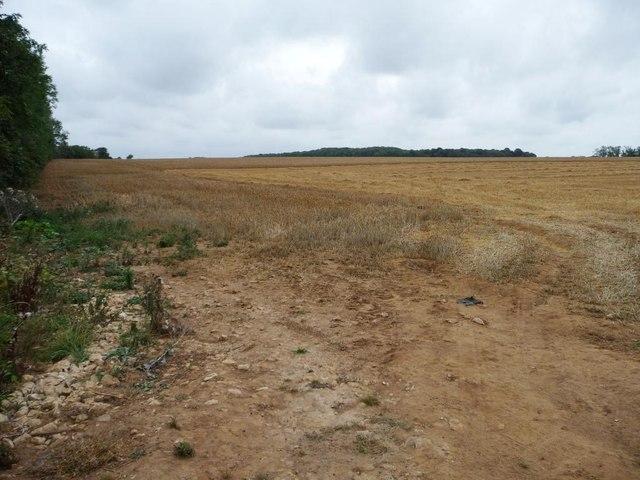 Large field east of Long Lane
