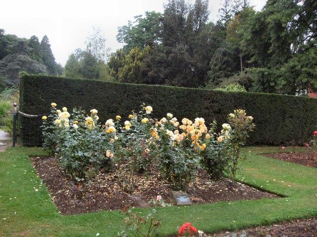 Flowers in Alexandra Park