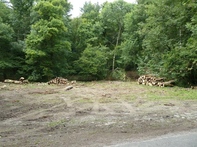 Log piles in Whitedown Plantation