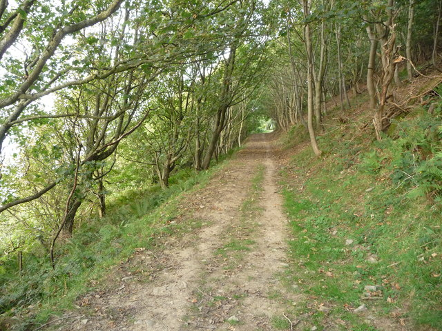 Path in woodland above Little Quay Bay
