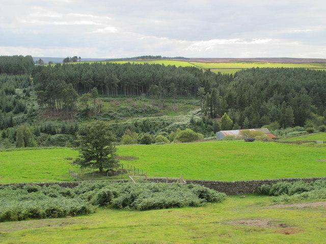 Disused mine shafts above Shildon Burn