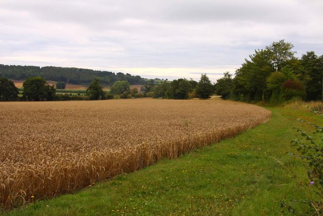 Wheat field near Coleshill