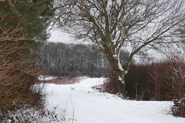 Common Lane copse in winter