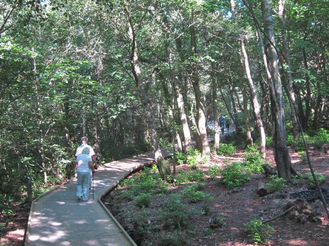 Boardwalk through Mallydams Wood