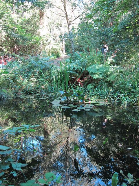 Pond in Mallydams Wood