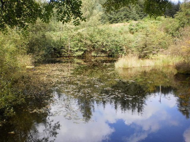 Nameless pond in Grizedale Forest