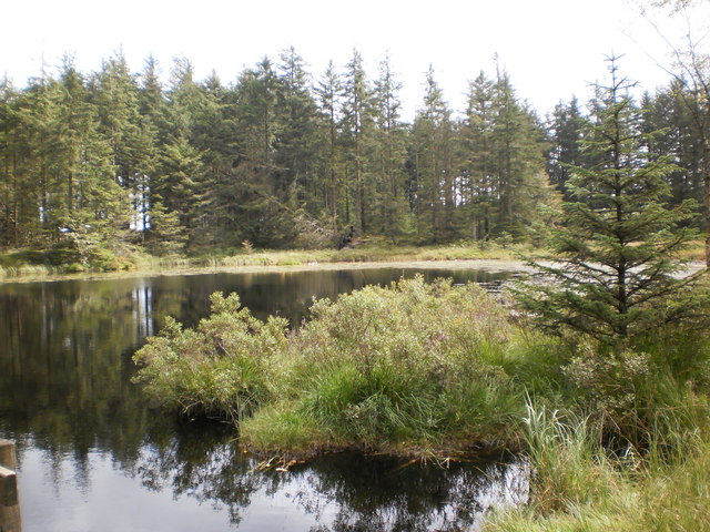 Grizedale Tarn in Grizedale Forest