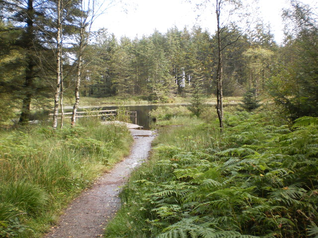 Path leading to Grizedale Tarn