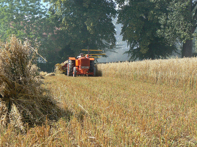 Harvesting with reaper and binder - 1