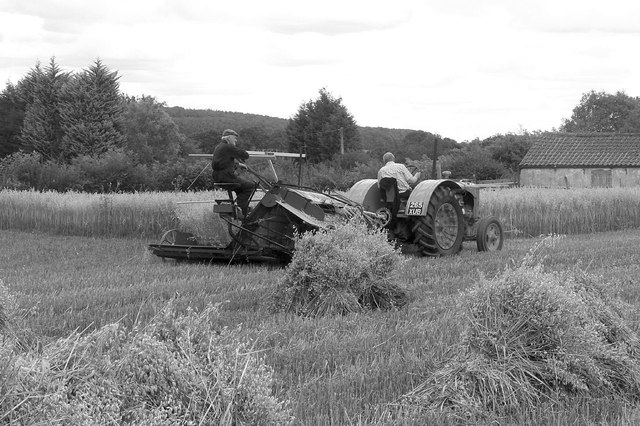 Harvesting with reaper and binder - 8
