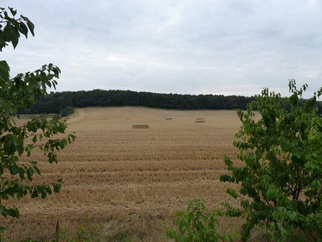 Wheat stubble in a field near Rudge