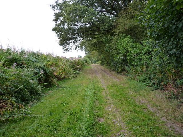 Bridleway beside the woods