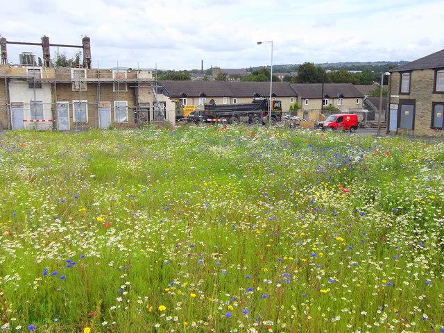 Meadow, Burnley Wood, Burnley