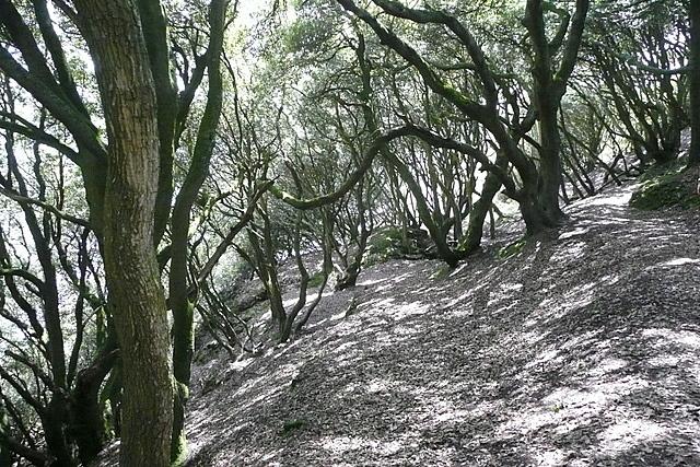 Coastal path at Mawnan