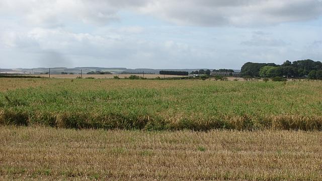 Weeds and barley