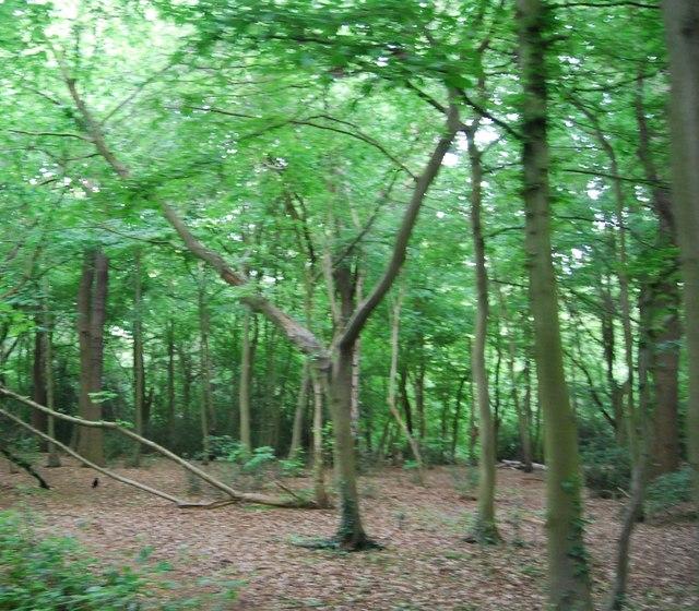 Woodland, Wimbledon Common