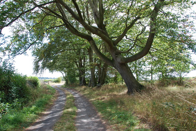 The Leaning Tree of Walton Grange