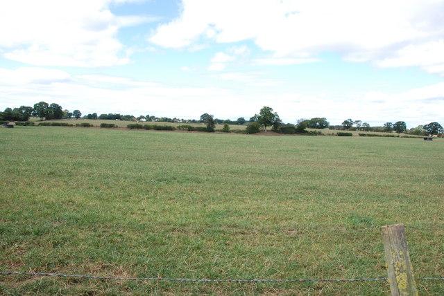 Grassland, Walton Farm looking to Bromstead Common