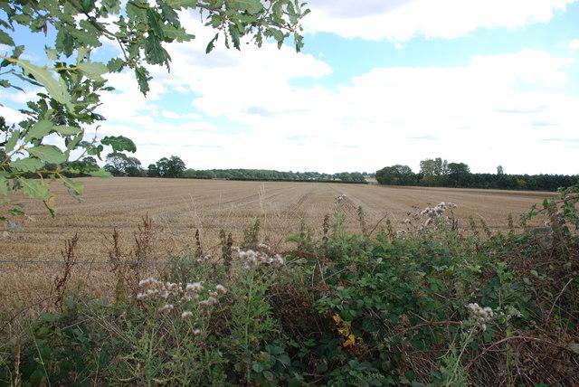 Over the hedge, Walton Farm