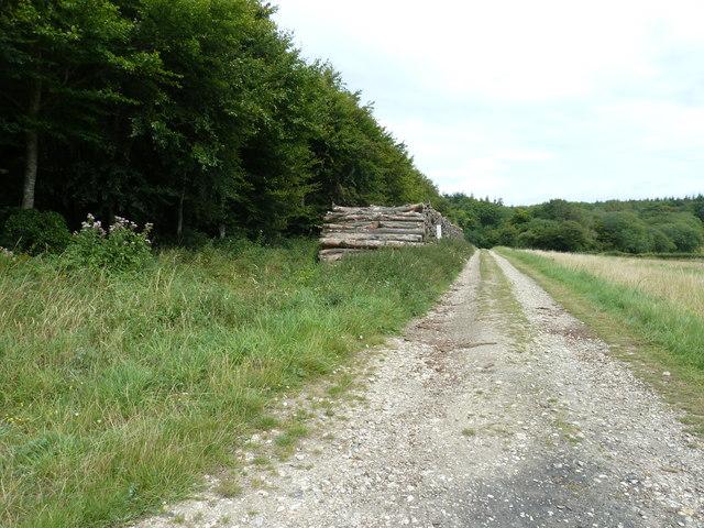 Old log pile by Rabbit Warren
