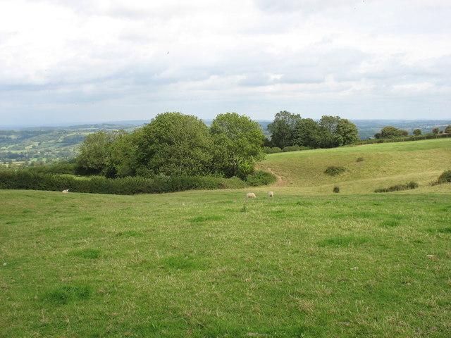 Fields near Nett Wood Farm