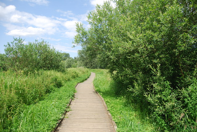 Boardwalk in the Yare Valley