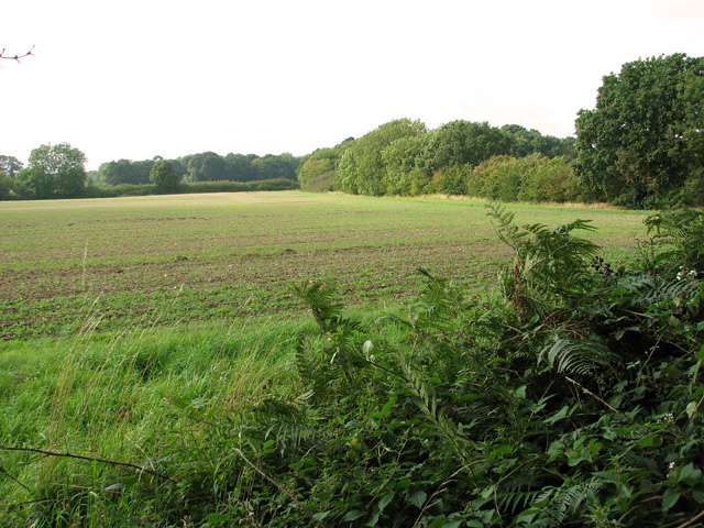 Field west of Sandy Lane, Ringland Hills