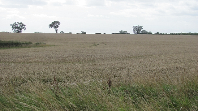 Wheat field near West Fleetham