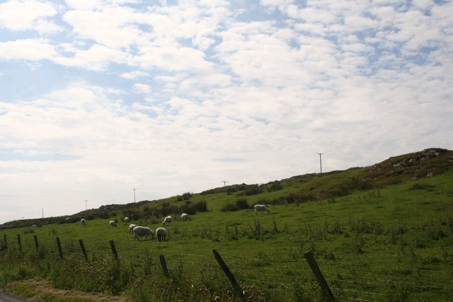 Sheep by Nerabus