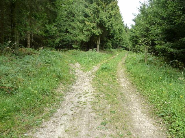 Bridleway split Westdean Woods