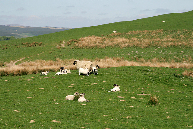 Farmland at Corsehill