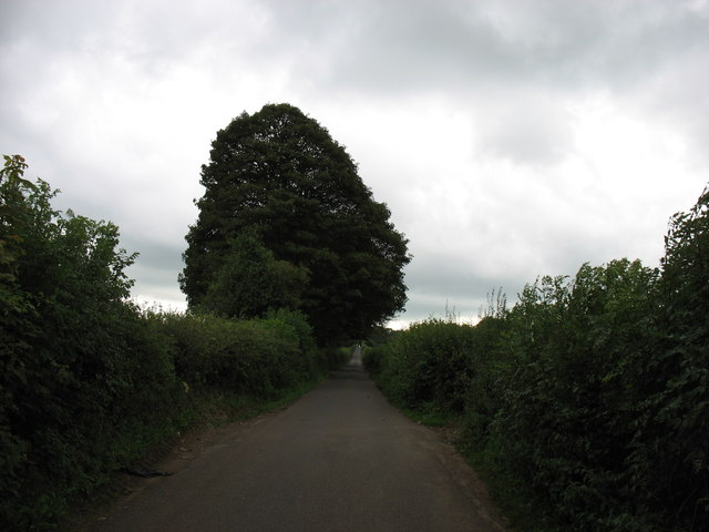 The lane to Cheddar