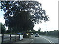 SJ8174 : Knutsford Road by Colin Pyle