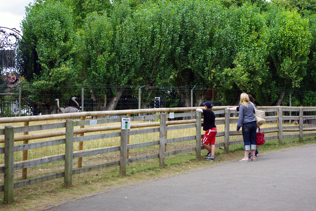 The rhea enclosure - Birmingham Nature Centre