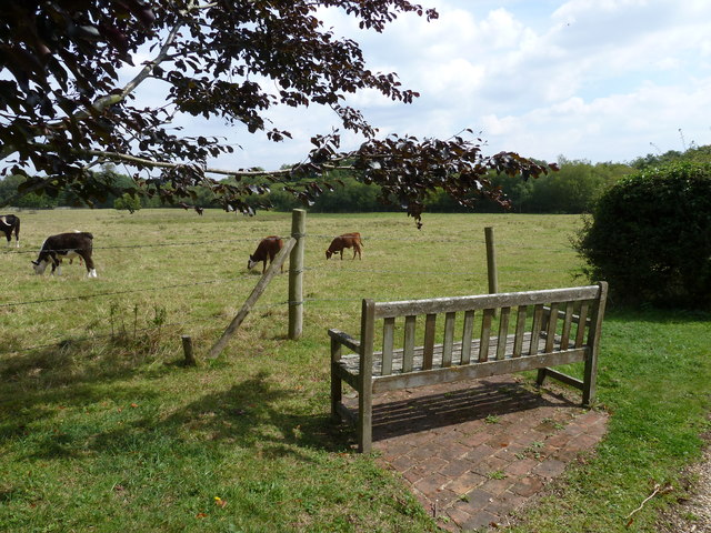 On the path from Nately Road to Greywell Church (3)