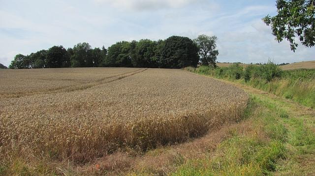 Wheat field, Preston