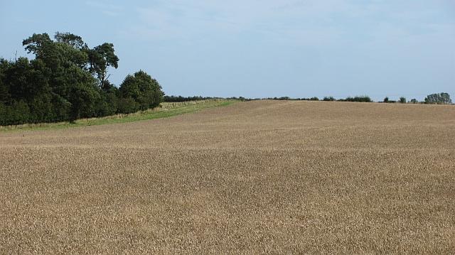 Wheat field by Preston