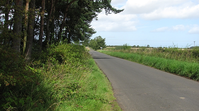 A road passing Allansford Plantation