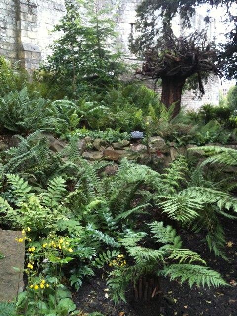 Fern Garden, Museum Gardens, York