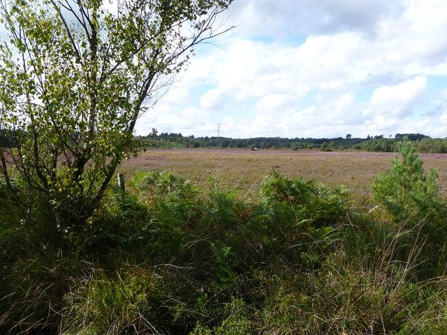 Week Common, heathland