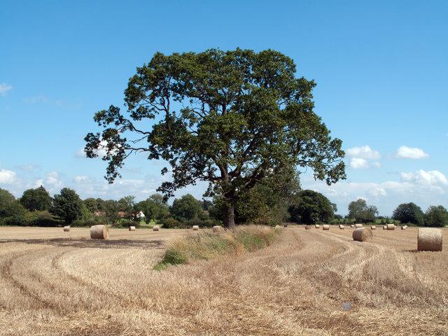 Fields east of B6275