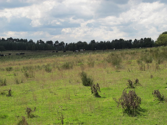 Farmland northeast of Hardriggs (2)