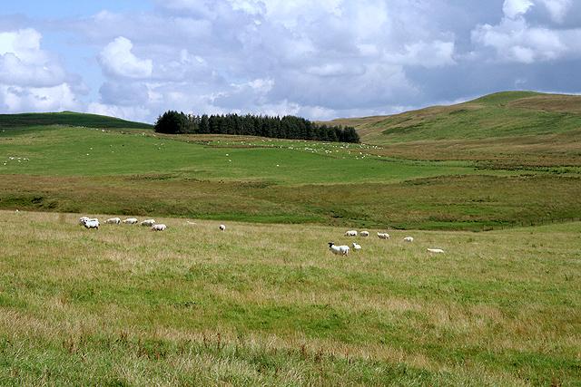 Farmland at Dry Cleuch