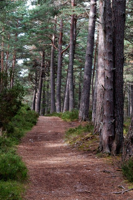 The Green Trail in Abernethy Forest