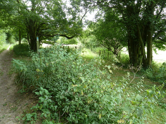 Bridleway and footpath junction