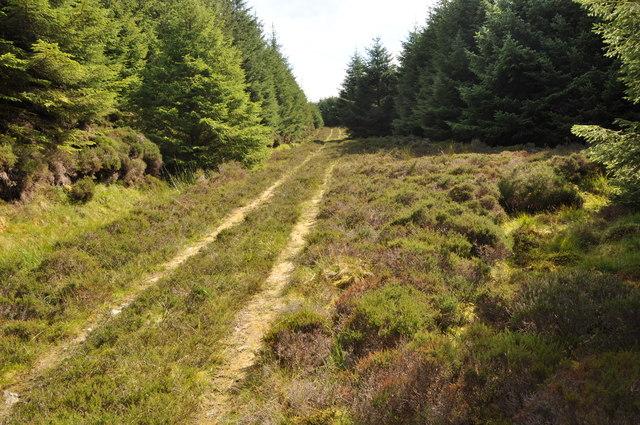 Forest track, Cruach Muasdale, Kintyre